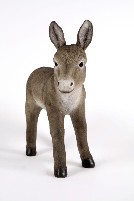 Mooie staande Grijze  ezel kopen