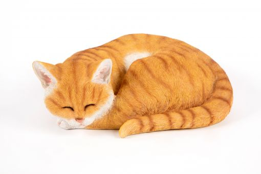 Mooie slapende  rood kat kopen