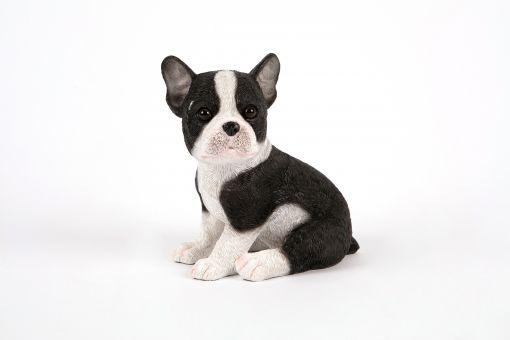 Mooie puppie Franse Bulldog tuinbeeld kopen