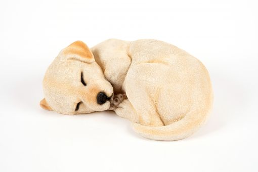 Mooie slapend  Labrador tuinbeeld kopen