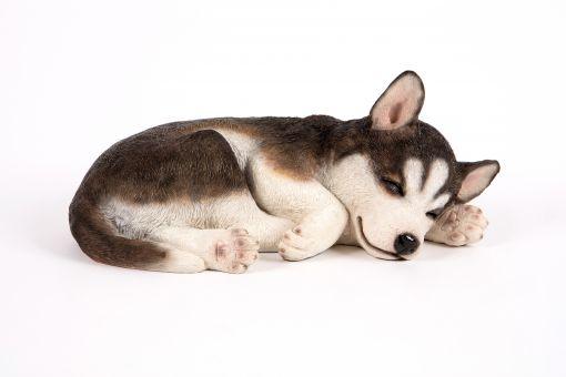 Mooie Syberische husky  slapend tuinbeeld kopen