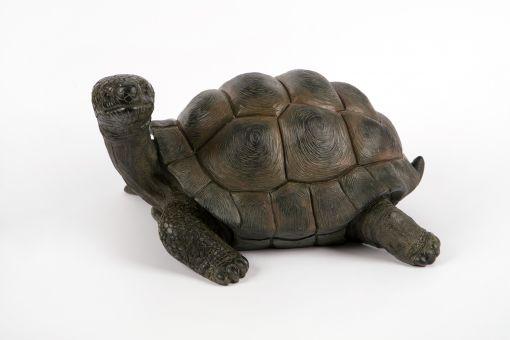 Mooie Schildpad kopen