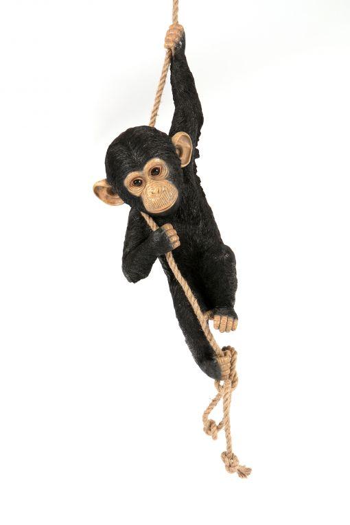 Mooie Klimmende  Chimpansee kopen