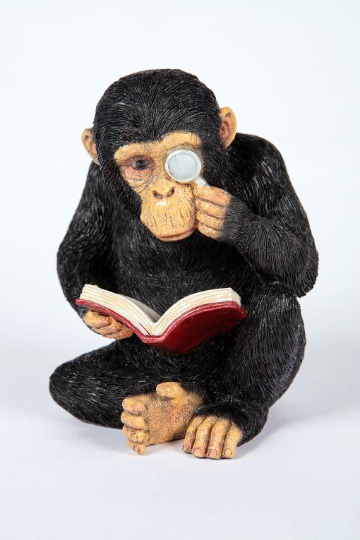 Mooie lezende  Chimpansee tuinbeeld kopen