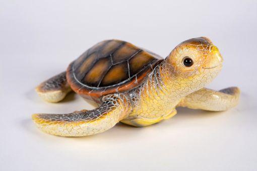 Mooie Zeeschildpad kopen